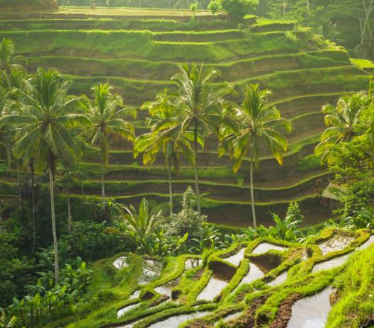 Why Bali Indonesia